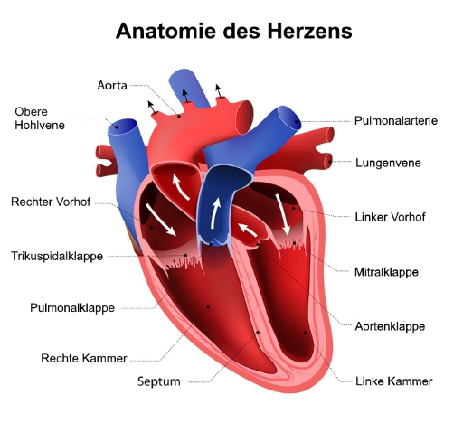 Quelle: www.cardio-guide.com